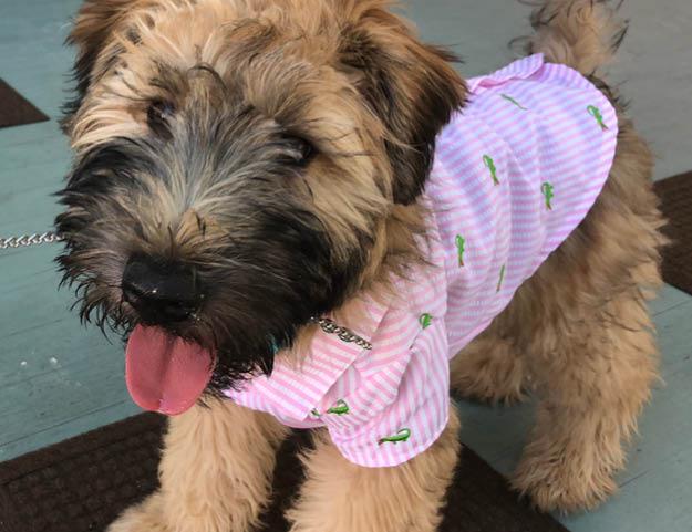 Hash Brown Cutest Pup Winner 2018
